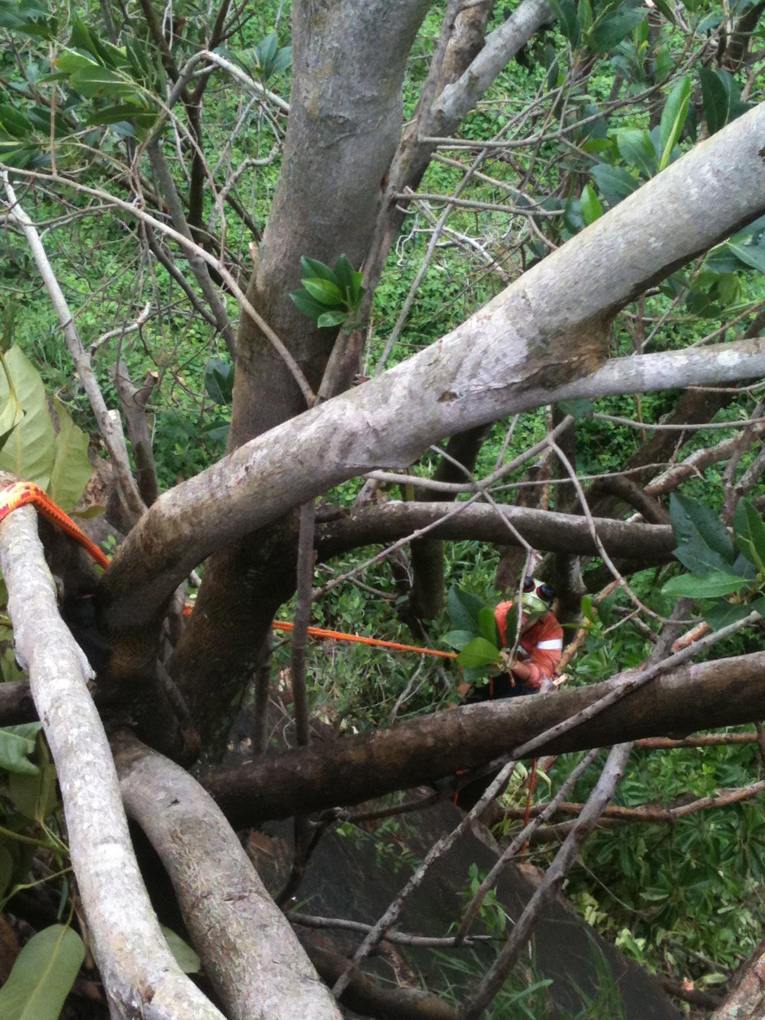 Mcintosh Tree Serviceshome Services  Upper Caboolture -7281